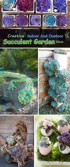 Creative Indoor And Outdoor Succulent Garden Ideas.