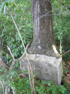 Nature Reclaims an Abandoned and Forgotten Cemetery