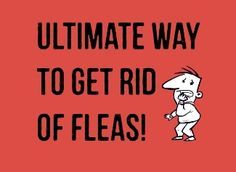 Nothing can lead to more sleepless nights than fleas! In this guide, you will learn how to get rid of fleas naturally in your house, kitchen or on your dog.