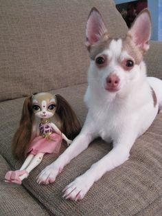 Pinkie Cooper doll with Pants, the Toy Box Philosopher's chihuahua. Awwwww.