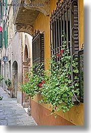 Google Image Result for http://www.danheller.com/images/Europe/Italy/Tuscany/Towns/Montalcino/FlowersDoorsWindows/flowers-in-windows-5.jpg