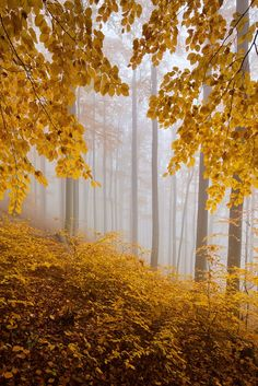 ***Autumn forest (Ore Mountains, Czech Republic) by Daniel Řeřicha