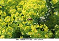 Closeup of lush green foliage with honey bees on flowers in springtime.