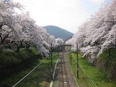 「山北鉄道公園 桜のトンネル ♪♪♪」  この鉄道公園は美しい桜の名所として知られており、 鉄道公園を含む山北駅の東側の樹齢約50年のソメイヨシノ約130本の桜並木は、 神奈川県の「かながわのまちなみ100選」に選ばれています。 また、昭和43年御殿場線全線の電化によって蒸気機関車としての使命を終えた、 D52-70が、鉄道公園内に記念展示されています。  鉄道公園に展示されているD52-70は、昭和43年8月1日、御殿場線全線に電車が走るようになりその勤めを終えました。 現在は、鉄道公園に保存され、山北駅鉄道公園保存委員会の手によって大切に維持管理されています。 D52-70号は、D52型蒸気機関車、D52型兄弟の70番目の生まれで、昭和19年4月に製造され、 山陽線、東海道線で働き、昭和26年2月、国府津機関区に配属になってからは御殿場線で活躍しました。