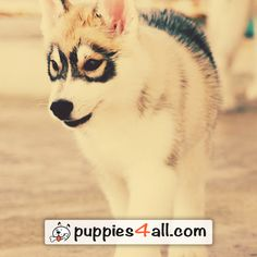 Find your best friend on our site: http://puppies4all.com/ #dog #cute #puppy