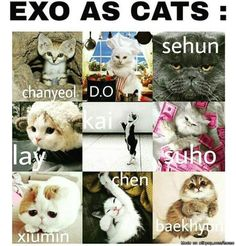 EXO as cats | allkpop Meme Center