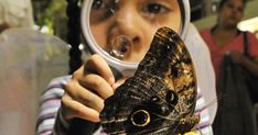 Welcome to a virtual field trip to the Butterfly Conservatory! This field trip is designed for students in grades K-2 to observe butterflies and compare their patterns.