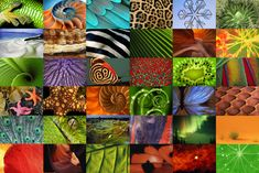 Fabulous Fibonacci! This animation shows how the Fibonacci sequence of numbers underlies many beautiful patterns in nature. Amazing work.