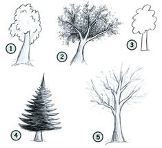 How to draw cartoon trees step 4