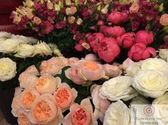 Summer Wedding, Wedding Flowers, Rose, Plants, Pink, Plant, Roses, Planets, Bridal Flowers