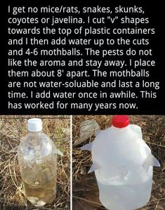 Reddit - homestead - A useful backwoods trick Simple Life Hacks, Useful Life Hacks, 1000 Lifehacks, Jardin Decor, Building A Chicken Coop, Natural Garden, Insect Repellent, Mice Repellent, Snake Repellant