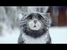 Короткометражный рождественский фильм про кота (с переводом) - YouTube