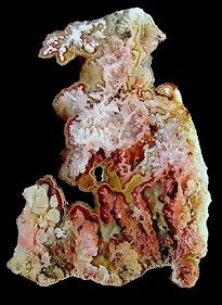 Crystal Bouquet, Citrine Crystal, Petrified Wood, Rocks And Gems, Rocks And Minerals, Jasper, Feather, Gem Stones, Crystals