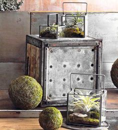 Roost Square Dry Terrariums