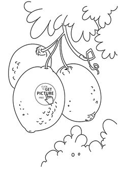 lemons on bunch fruit coloring page for kids fruits coloring pages printables free wuppsy