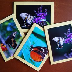 """This would make a great Mother's Day gift.  Set of 4 butterfly blank notecards 5.5"""" x 4.25"""" by DownNaturesPath on Etsy"""