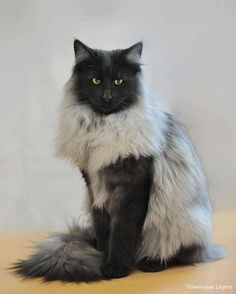 Looks like she's wearing an extra fur coat!  What a beauty!