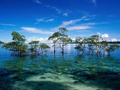 Andaman and Nicobar Islands are a mysterious land shimmering in the Bay of Bengal. The islands are more popular for its inaccessibility for centuries. The thick forests which coat these islands make the destination perfect for nature and peace lovers.