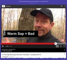 #PWH : GardenforkTV vid Is the sap running?   #GardenforkTV #OvercastFM #ProductHunt https://www.youtube.com/watch?v=sUrpVjvduOQ&feature=youtu.be