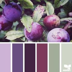 """today's inspiration image for { fresh palette } is by @_ewabakrac ... thank you or another fresh + inspiring #SeedsColor photo share, Ewa!"""