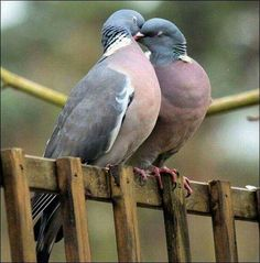 A Pair of Pigeons!!! Bebe'!!! So sweet!!!