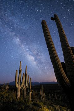 Milky Way Over Arizona - night sky so clear camping on the rim.