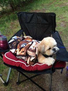 My shih Tzu love camping, Mon shih Tzu aime le camping <3 <3