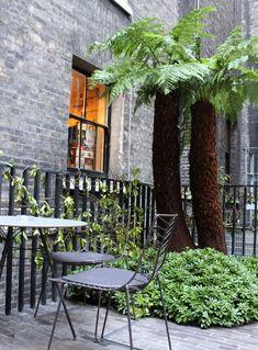 A Secret Courtyard Garden in Piccadilly, Ancient Tree Ferns Included - Gardenista - euphorbia Royal Academy Garden. Vertical Garden Plants, Ferns Garden, Small Space Gardening, Garden Spaces, Balcony Garden, Small Courtyard Gardens, Small Courtyards, Small Gardens, Townhouse Garden