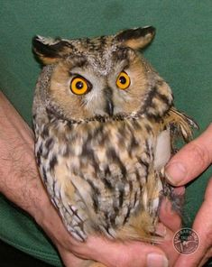 40 Great Owl Pictures to Admire | http://www.barneyfrank.net/great-owl-pictures-admire/