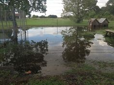 A Southeast Texas viewer's backyard became somewhat of a swamp during heavy rains this year -- 2013.