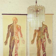 Carteles de anatomía vintage en Alquián