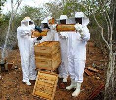 Pregopontocom Tudo: Criação de abelhas é alternativa de renda para agricultura familiar na Bahia...