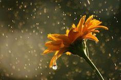 Ne felejtsük, hogy amikor mi épp szomorkodunk az eső miatt, akkor a virágok táncot járnak :)