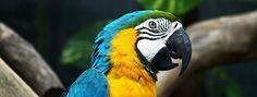 Első Parrot, Animals, Parrot Bird, Animales, Animaux, Animal, Animais, Parrots