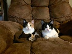 These two mousers were brought inside to celebrate Christmas with everyone Funny Cat Pictures, Animal Pictures, Cute Pictures, Kittens Cutest, Cats And Kittens, Cute Cats, Cute Emo Boys, Beautiful Kittens, Pets 3