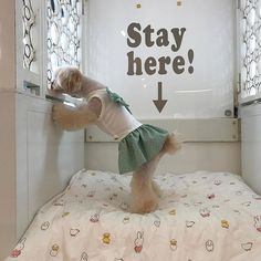 stay here!  #🐶#チワプー  #チワワ  #トイプードル#chihuahua#小型犬#mix犬#dog#dogs#cute#love#lovely#family#animals#animal #insta#instabeauty#instagood#instalike#instalove#instalovers#instalook#instamood#pic#photo#pretty#instadog#愛犬