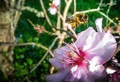 #alentejo #flowers