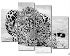Blue Eyed Leopard Wall Art via Wish Oil Painting On Canvas, Painting Prints, Wall Art Prints, Canvas Prints, Leopard Pictures, Print Pictures, Cheetah Print Walls, Cross Paintings, Art Oil