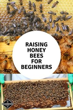Tips For Gardening Start here to learn everything you need to know about raising honey bees. Find out the equipment you'll need to get started. How To Start Beekeeping, Beekeeping For Beginners, Gardening For Beginners, Gardening Tips, Honey Bee Farming, Honey Bee Garden, Bee Hive Plans, Honey Bee Hives, Raising Bees