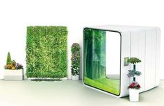 futuristic garden Indoor Plant Wall, Indoor Plants, Evergreen House, Home Camera, Macrame Plant Hangers, Plant Care, Home Projects, Greenery, Home And Garden