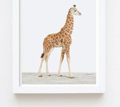 Animal Print Shop by Sharon Montrose.  Wonderful animal prints for children's rooms or other.