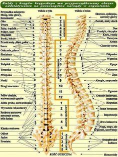 Kręgosłup Yoga Fitness, Health Fitness, Natural Health Remedies, Health Advice, Better Life, Healthy Tips, Health And Beauty, Fun Facts, Pilates
