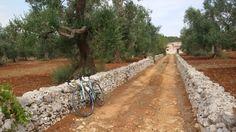 Valle d'Itria by bike, in Puglia, off the beaten tracks
