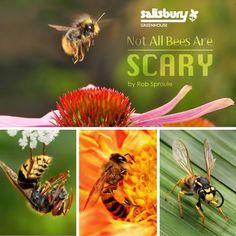 Not All Bees Are Scary - By Rob Sproule, Salisbury Greenhouse #Bees #Garden