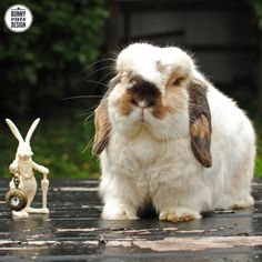 Tofu the bunny and the white rabbit