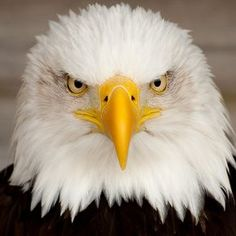 "- Bald Eagle remenber when MOM just gave you "" the look' AND YOU SHAPED RIGHT UP."