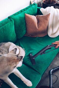 Anzeige. Sauberer Haushalt mit Hund, Tierhaarstaubsauger, tierhaarstaubsauger im test, tierhaar Staubsauger THOMAS, Aqua pet and Family, Thomas Staubsauger, Zubehör Thomas Staubsauger, Tierhaare entfernen, Hundeblog, Alltag mit Hund, Leben mit Hund, Hundeblogger Österreich, Staubsauger für Tierhaare, Teppich tierhaushalt, Haustier Ratgeber, Staubsauger für Tierhaare, Fellwechsel beim Hund, Pflegetipps für Hunde, Hunde Tipps, www.whoismocca.com, #hundeblogger #tierhaushalt #haustiere… Tote Bag, Bags, Handy Tips, Pets, Household, Life, Handbags, Totes, Bag