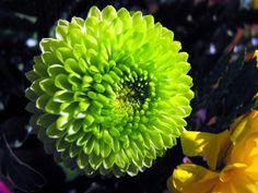 Green cut flowers