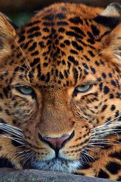wowwww!!!...earthyday: Portrait by Anni