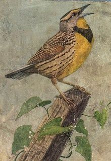 Beautiful Yellow and Brown Bird - The Graphics Fairy